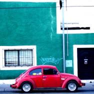 Chihuahua_car_1